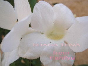 Shana Tova from kahliya 2008
