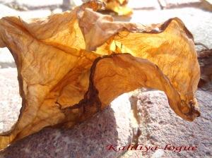 Dried yellow flower/kahliya-logue